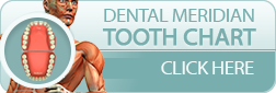 Charleston Dentist - Meridian Tooth Chart